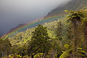 Rainbow at West Coast forest, New Zealand