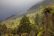Rainbow at West Coast forest, New Zealand