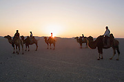 GOBI DESERT, MONGOLIA..08/31/2001.Riding at dawn/sunrise with camels of wealthy herder and local hero Chimiddorj from Tsagan Bulag to Tsagan Gol near Bayangovi..(Photo by Heimo Aga).