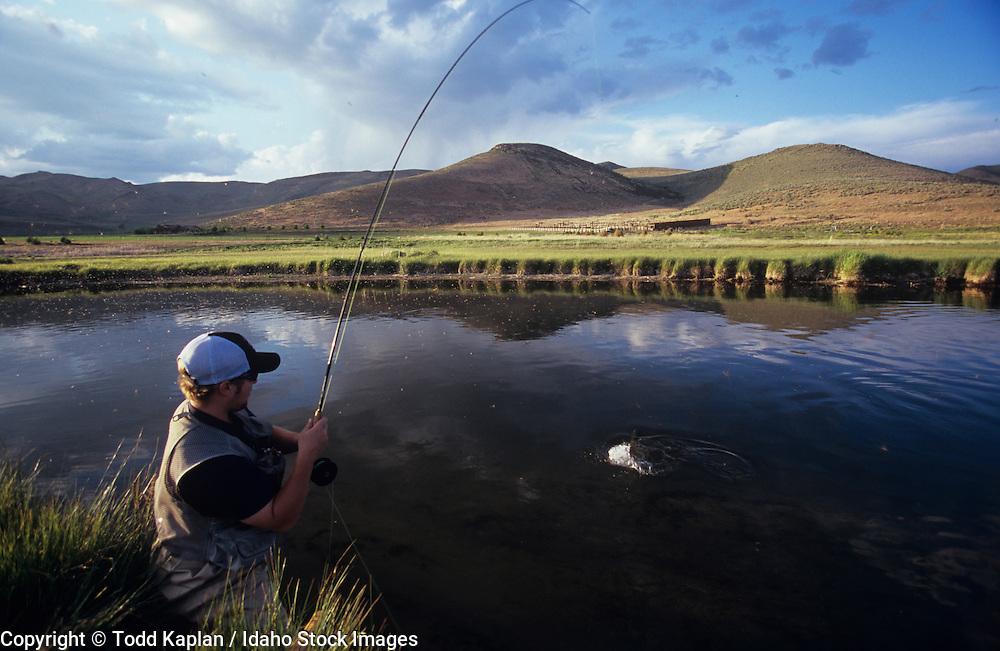 Idaho, Silver Creek, Fly fishing, fisherman, late afternoon, Man landing, fighting trout, brown drake hatch, mayfly, may flies, hatch,