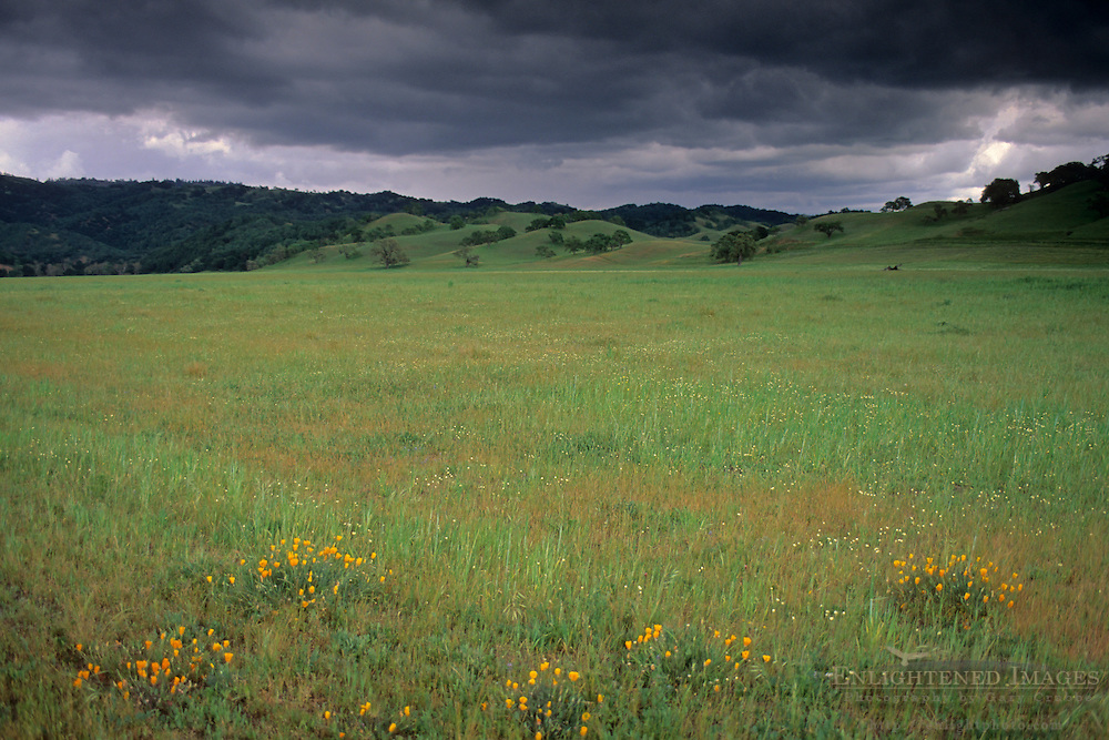 Green grass in rural pasture lands in Spring, O'Connell Ranch, Santa Clara County, California