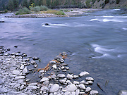 Autumn, Fall, River, Rapids, Salmon River, North Fork, Idaho