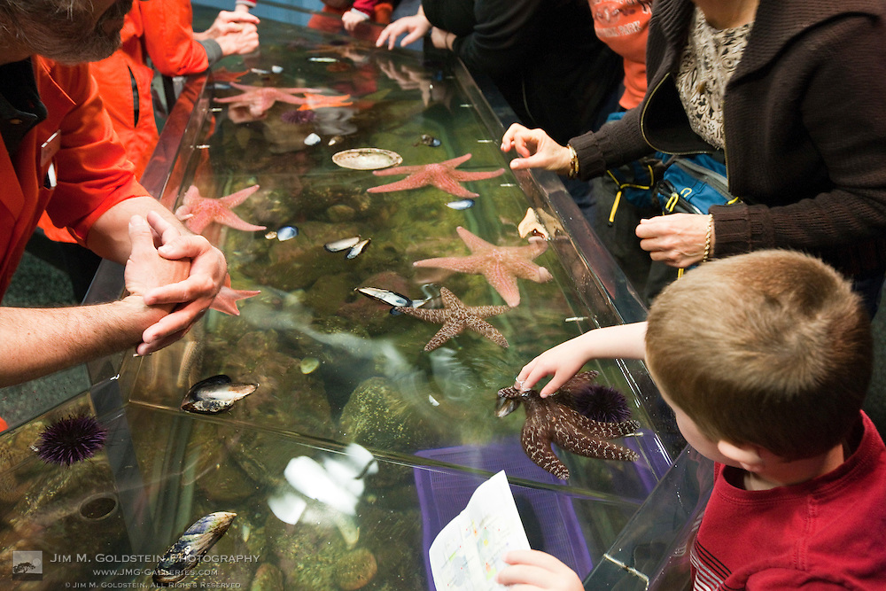 A child touches a Starfish at the Steinhart Aquarium in the California Academy of Science - San Francisco, California