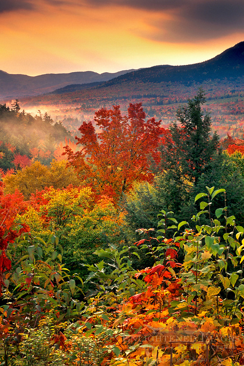 Autumn colors on trees in fall at sunrise along the Kancamagus Highway in autumn, White Mountains, New Hampshire