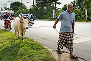 11 JULY 2013 - PATTANI, PATTANI, THAILAND:   A Muslim man walks along a highway in Pattani with his bull.     PHOTO BY JACK KURTZ
