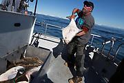 Kapten Nik Ranta med en h&auml;lleflundra ombord p&aring; hans b&aring;t i Seward, Alaska<br /> <br /> Photographer: Christina Sjogren<br /> <br /> Copyright 2018, All Rights Reserved