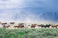 Wyoming. Grand Teton National Park, designated in 1950; located in Moose Cowboy and Horses,These United States Page 179: