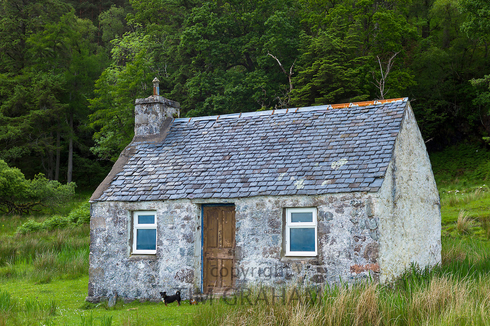 Terrier by traditional humble Scottish fisherman's cottage at Kilmalieu on the shores of Loch Linnhe, Western Highlands of Scotland