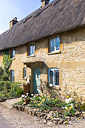 Charming pretty thatched cottage, thatching, leaded light windows, spring flowers in front garden at Taynton, The Cotswolds, UK