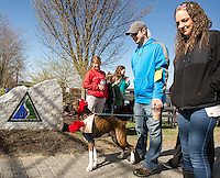 """Vinnie Raso and his """"boxer"""" Lennox Lewis are ready to go for Saturday's Bow Wow Fest at Opechee Inn and Spa.  (Karen Bobotas/for the Laconia Daily Sun)"""