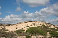 BLOEMENDAAL - Kennemerduinen , Nationaal Park Zuid-Kennemerland.  ANP COPYRIGHT KOEN SUYK