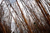 Reportage sul comune di Alessano per il progetto propugliaphoto..Macurano è un villaggio rupestre considerato un luogo di scambio e commercio, simbolo della cultura dell'olio per la presenza ad oggi di alcune tracce nelle grotte e di frantoi funzionanti nella zona. L'insediamento è caratterizzato da una serie di grotte sia naturali che scavate nel calcare, cisterne per la raccolta dell'acqua, sistemi di canalizzazione che scendono da Montesardo, viottoli, scalette e vie più larghe con antiche tracce di carri..Si ritiene che in questo sito, un vero e proprio centro abitato ben organizzato distante circa quattro km dalla costa, i monaci basiliani scappati dall'oriente in seguito alla lotta iconoclasta, trovarono rifugio e si dedicarono all'agricoltura..L'area del villaggio rupestre fu sicuramente sfruttata in epoche successive, lo prova l'esistenza di ben tre masserie di cui una fortificata e i resti di una serie di costruzioni che fanno parte dei numerosi esempi di architettura rurale presenti in questo territorio. .Il complesso masserizio, denominato Macurano, edificato probabilmente nel Cinquecento include la Masseria di Santa Lucia e la cappella di Santo Stefano. La Masseria è dominata dal nucleo originario, ovvero dalla torre cinquecentesca coronata da beccatelli a sostegno del parapetto aggettante del terrazzo sommitale.