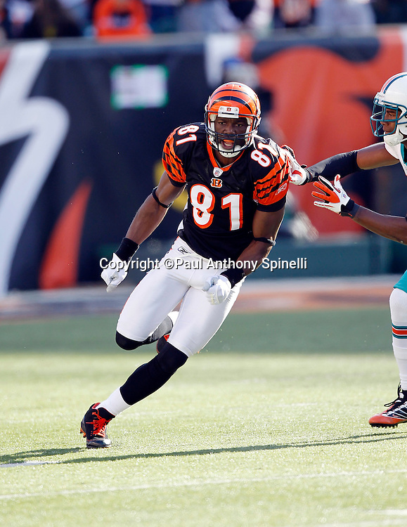 Cincinnati Bengals wide receiver Terrell Owens (81) goes out for a pass during the NFL week 8 football game against the Miami Dolphins on Sunday, October 31, 2010 in Cincinnati, Ohio. The Dolphins won the game 22-14. (©Paul Anthony Spinelli)