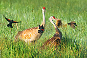 10 predation & mortality