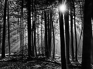 B&W Forest and Trees