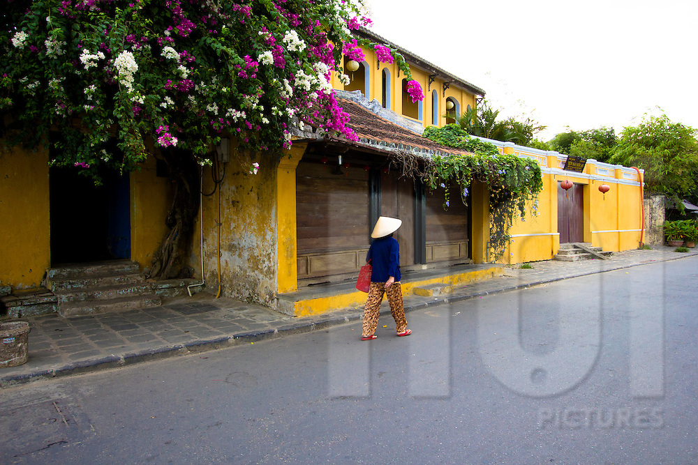 A middle age vietnamese woman with a conical hat walks in a street of Hoi An, Vietnam, Asia, 2012. French style colonial houses present colorful yellow walls and a bougainvillea is blooming.