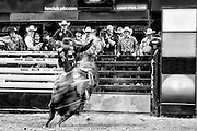 Sitting in the shark tank gives a great perspective at a PBR event.  I love the motion blur in this image. It shows the intensity and violence of the moment. Available in black and white in a limited edition print series of 100.