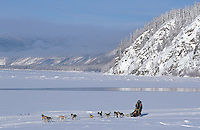 Dog musher on Yukon River, Yukon