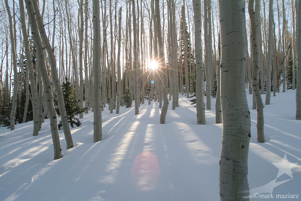 winter sunrise in aspen glade