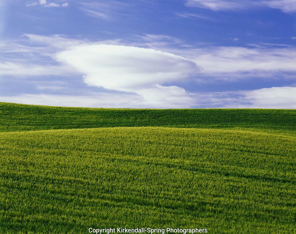 AA07300-01...WASHINGTON - Wheat fields in the fertile Palouse Region of Eastern Washington.