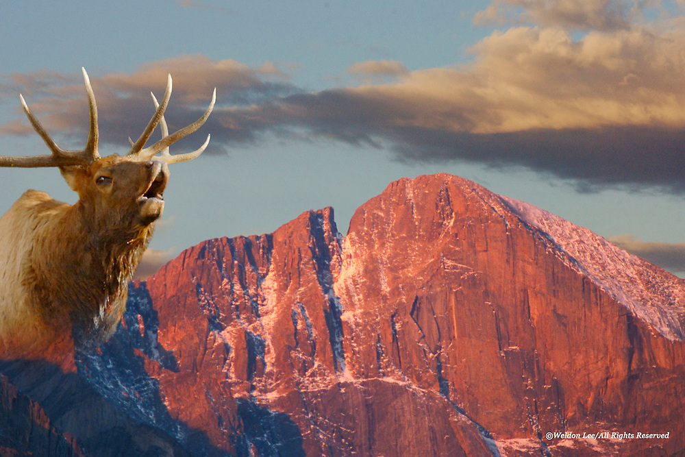 &quot;Spirit Elk&quot;<br />