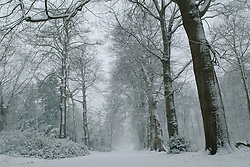 Boekesteijn Winter, koud, cold snow, sneeuw, winter, cold, wit, white