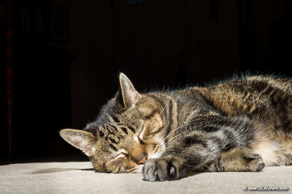 """Our cat, """"Moe"""" sleeping in the sun by the picture window."""