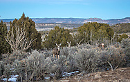 Schreiber's Devil Springs Ranch in Blanco, New Mexico.