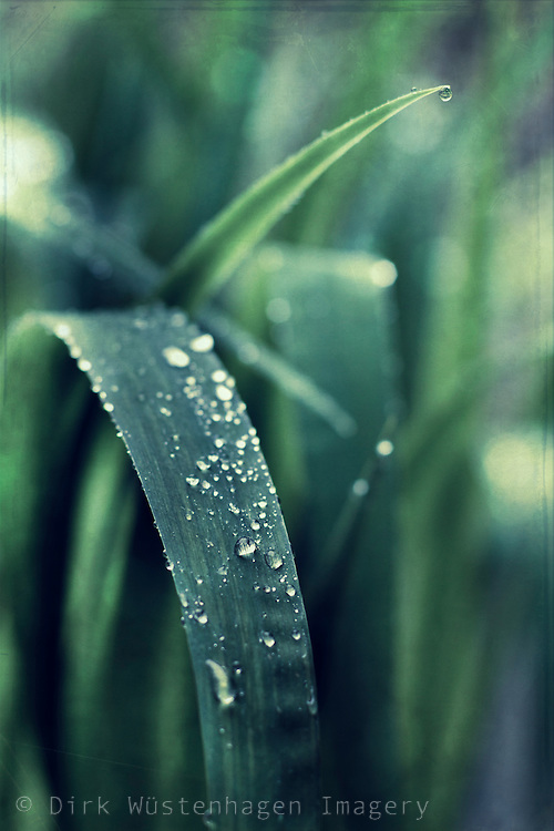 Waterdrops on a leaf - texturized photograph