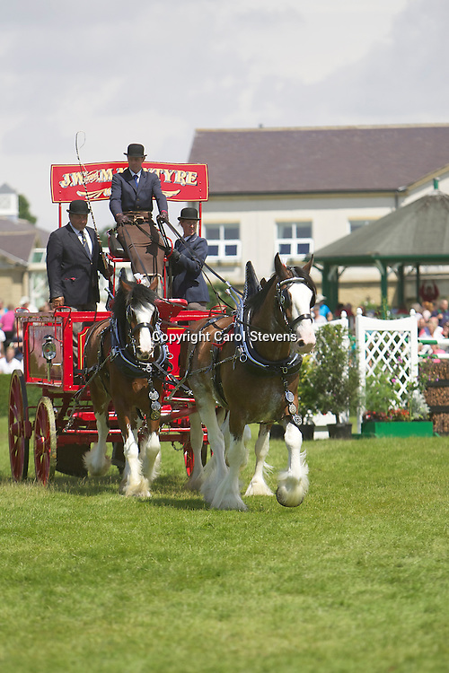 Mrs Margo McIntyre's Clydesdale Team driven by Ronald Brewster <br />