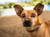 Adoptable Dogs 9-28-16