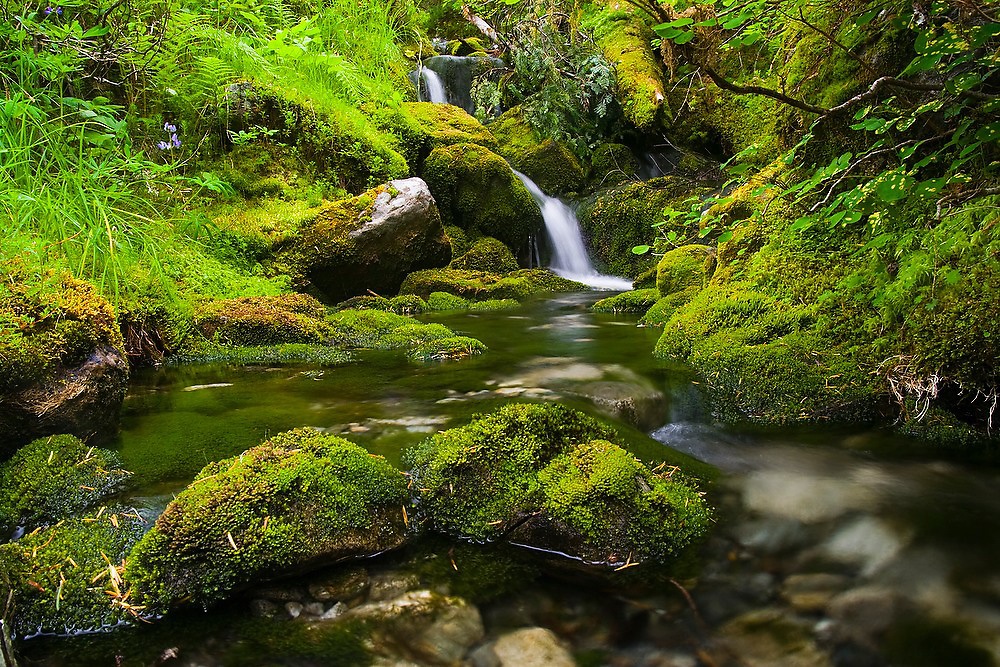 A small stream tumbles in waterfalls through lush vegetation and moss-covered rocks, North Cascades National Park, Washington.