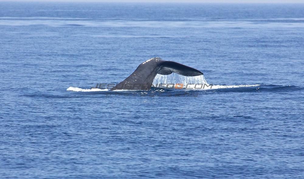oceana 2008