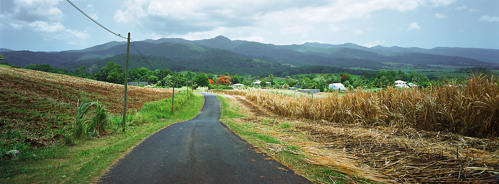 Road cutting through a sugarcane field, Le Lamentin, Guadeloupe.