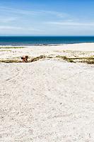 Sambaqui de Garopaba do Sul, um sítio arqueológico com cerca de 5.000 anos de idade, considerado o maior do Brasil. Jaguaruna, Santa Catarina, Brasil. / Shell midden in Garopaba do Sul district, an archeological site with about 5,000 years old, and considered the largest one in Brazil. Jaguaruna, Santa Catarina, Brazil.
