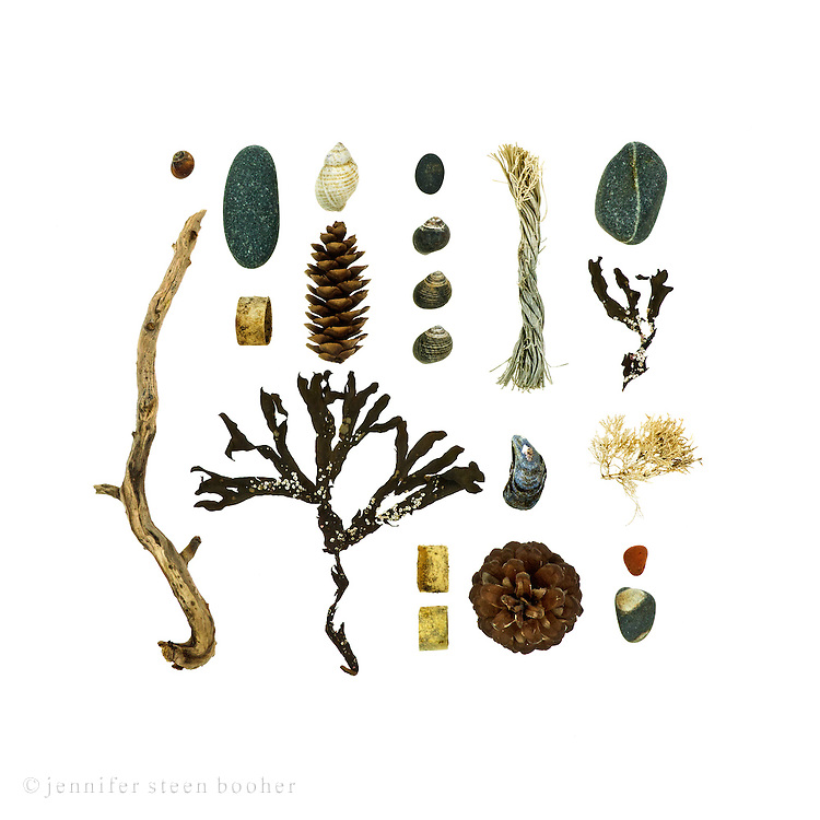 Common Periwinkle (Littorina littorea), driftwood, schist and granite beach stones, lobster-claw band, Dog Whelk (Nucella lapillus), White Pine cone (Pinus strobus), Rockweed (I think it's Fucus distichus) covered with Coiled Tube Worms (Spirorbis spirillum), rope, Blue Mussel (Mytilus edulis), Red Pine cone (Pinus resinosa), Coralline (Corallina officinalis), sea brick.