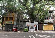 Bo Tree shrine at Meeraniya Street and Hultsdorf Street junction. Hultsdorf. Colombo 12.