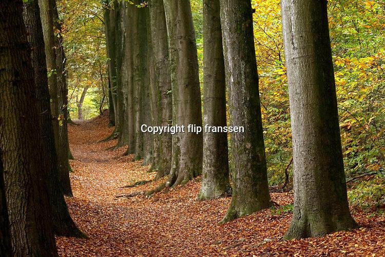 Nederland, Ubbergen, 3-11-2016Prachtige herfstdagen.Wandelen door een mooie laan in Beek .FOTO: FLIP FRANSSEN