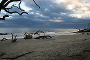 Morning High Tide on a driftwood strewn Jekyll Island beach.