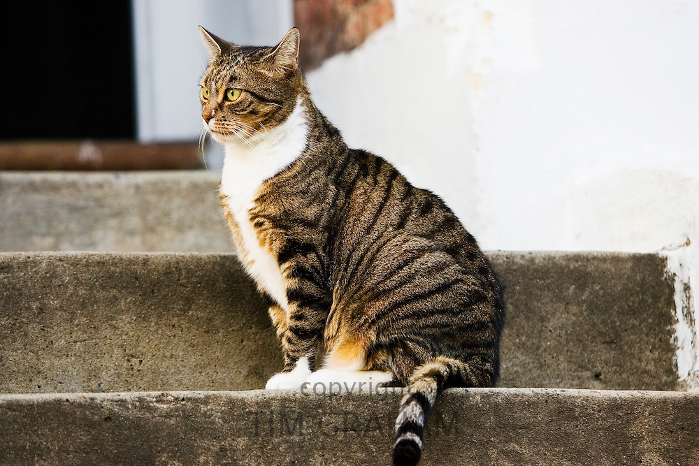 Tabby cat sits on a step, Oxfordshire, United Kingdom