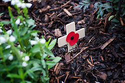 Remembrance cross, a small wooden cross decorated with a poppy, used to remember the sacrifice of members of the armed forces who have died in the line of duty, England, UK