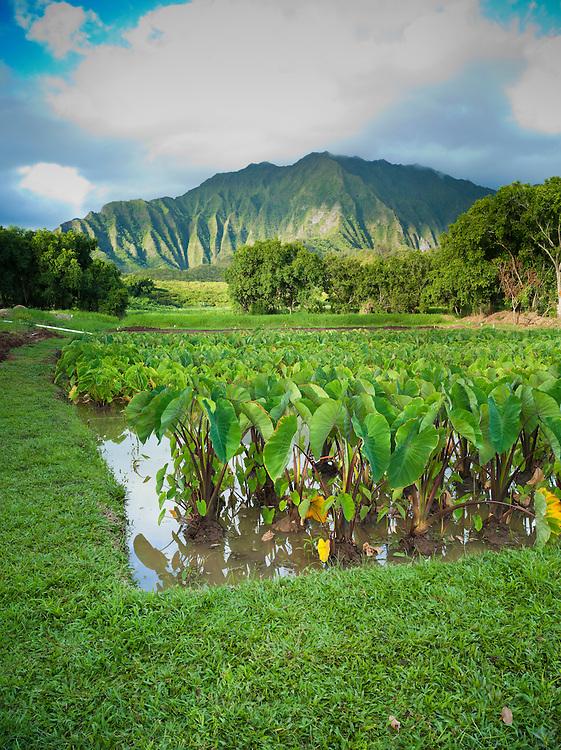 Mahuahua `ai o hoi, native Hawaiian land restoration program
