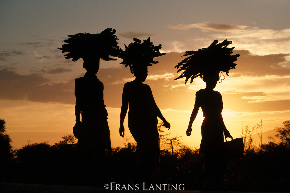 Antandroy women carrying firewood, Southern Madagascar