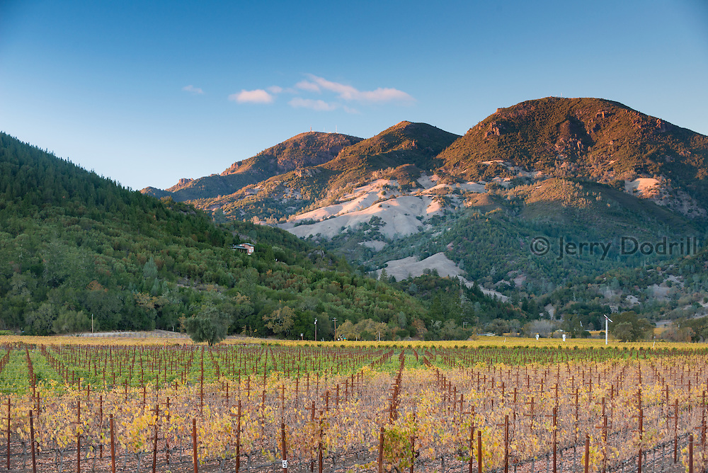 Mt. St. Helena rises above vineyards near Calistoga in Napa Valley, Northern California.