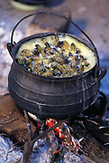 "A simmering pot of mopane worms in Botswana. The mopane worm is actually the caterpillar of the anomalous emperor moth (Imbrasia belina), one of the larger moths in the world. ""Mopane"" refers to the mopane treee, which the caterpillar eats. (Man Eating Bugs page 123 Inset)"