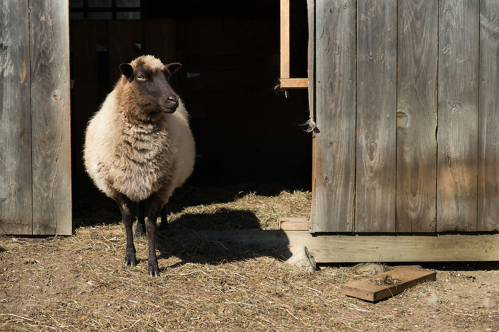 Bear Swamp Orchard and Cidery | September 19, 2014