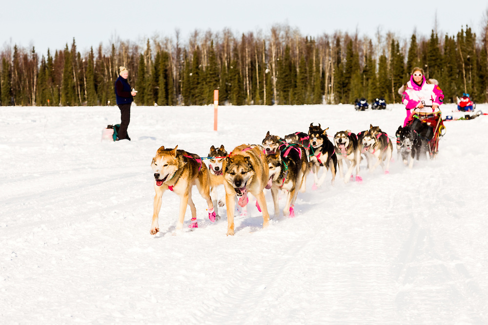 Musher DeeDee Jonrowe competing in the 41st Iditarod Trail Sled Dog Race on Long Lake after leaving the Willow Lake area at the restart in Southcentral Alaska.  Afternoon.