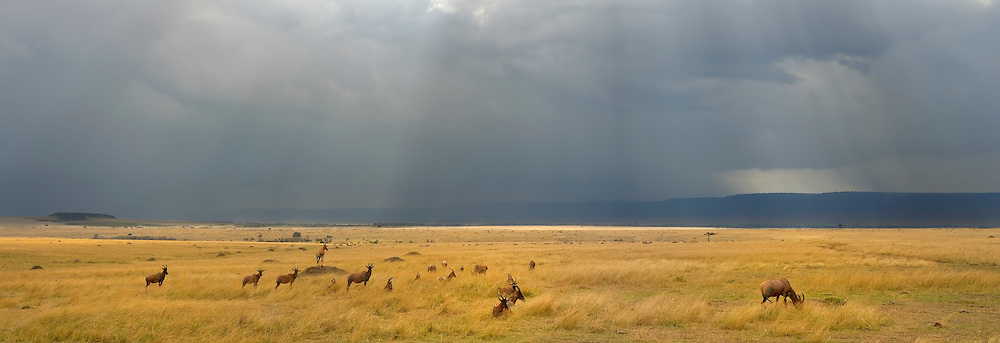 Sun rays through dark clouds in Masai Mara, Kenya