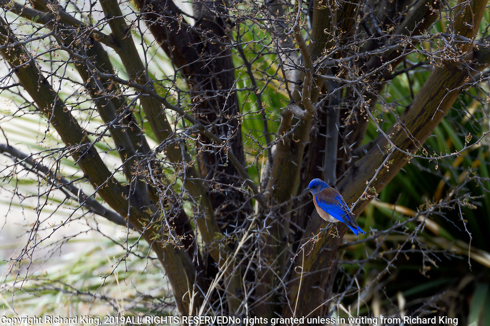 Wildlife photography from Big Bend National Park, Texas, USA
