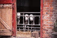 The Harvest Store Farm Shop in Nantwich wanted to show where their supplies came from!